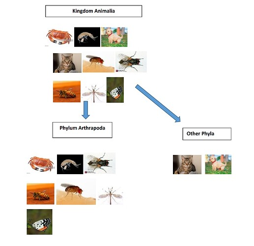 Animalia Arthropoda