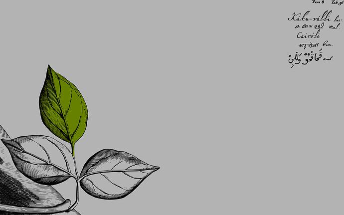 Hortus Indicus Malabaricus Wallpaper 01